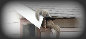 Squirrel Entering House