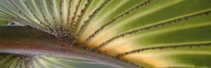 Mites on Palm Tree