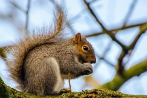 Green Bay Squirrel and Pest Removal
