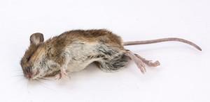 D Con The Dangerous Mouse Control Option By Erdyes