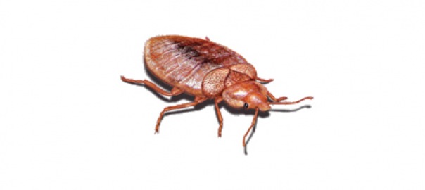 How To Eliminate Bed Bugs With Heat Treatment
