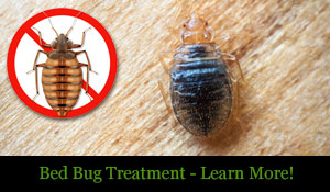 Erdye's Bed Bug Treatment