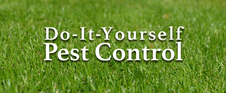 The Best Do It Yourself Pest Control Option