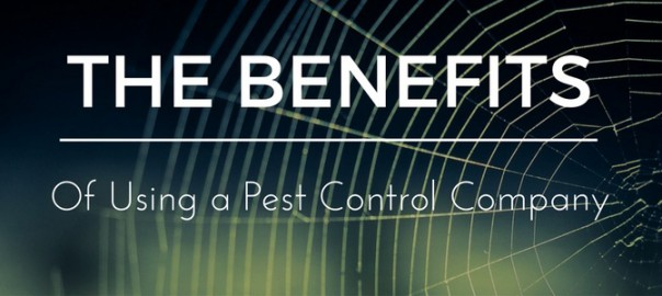 Benefits of Using a pest Control Company