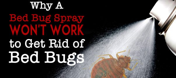 Why A Bed Bug Spray Won T Work To Get Rid Of Bed Bugs
