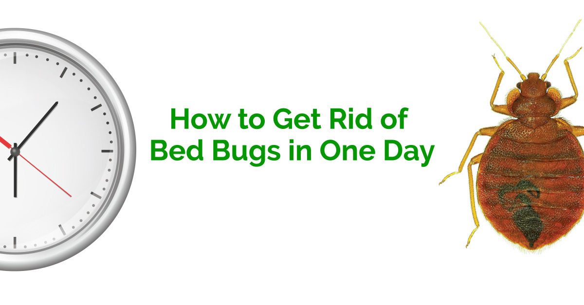 how to get rid of bed bugs in one day erdye s pest control
