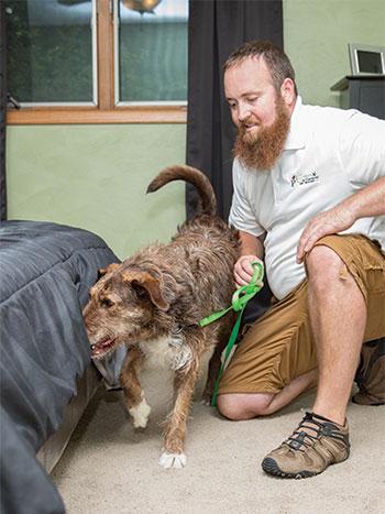 Erdye's Pest Control Bed Bug Detecting Dog