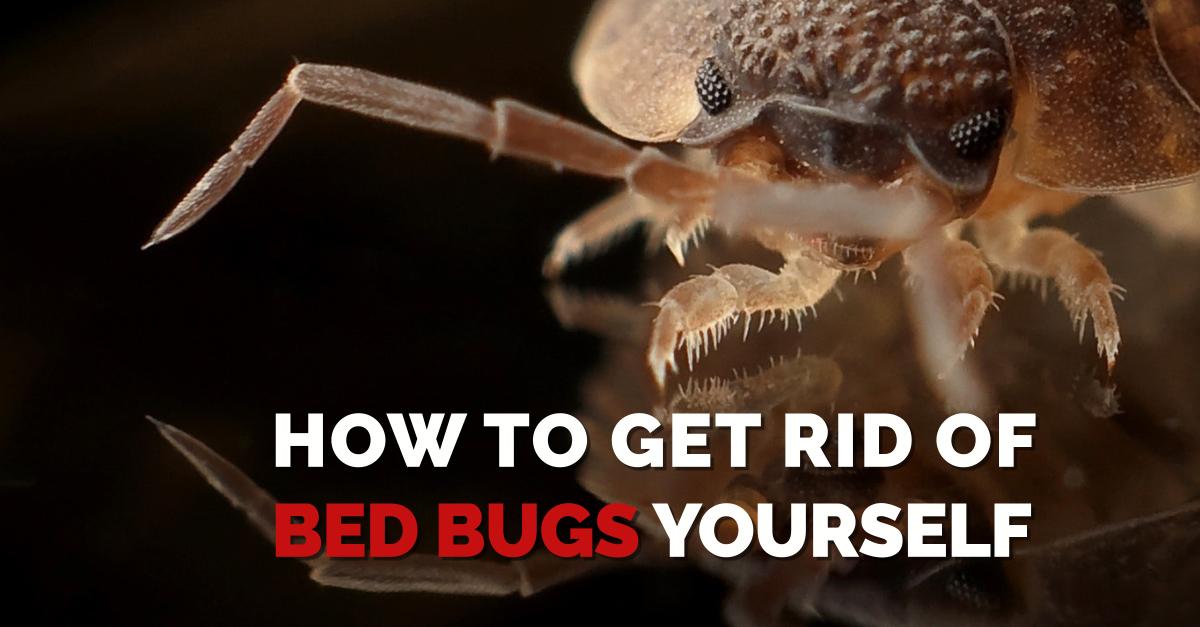 Bed Bug Treatment Heat