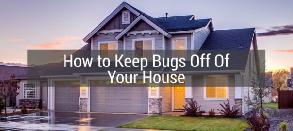 Keep Bugs off of Your House