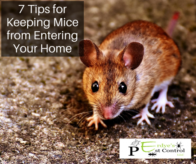 7 Tips for Keeping Mice from Entering Your Home-Erdyes-Pest-Control-Wisconsin