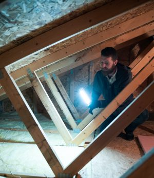 Erdyes Rodent Attic Inspection